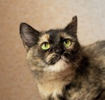 Кошка Кики ищет дом