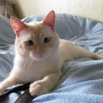 Котик-компаньон дома
