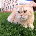 Кот Вася уехал домой!!