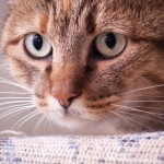 Муся-гроза котов дома