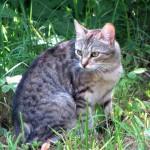 Кошечка Ксюша нашла свой дом!