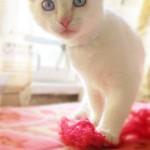 Багги, белоснежный малыш дома