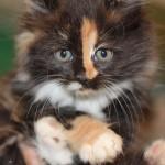 Красавцы котятки разъехались по домам