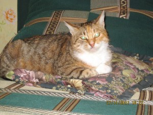Кошка Лиза ищет дом