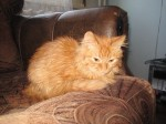 Котенок рыжунчик ищет дом