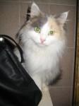 Кошка Аиша ждет Вас