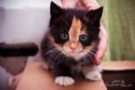котята-малыши
