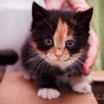 Котята-малыши нашли дом