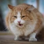 Чеширский кот нашел семью…
