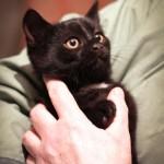 Котенок-негритенок дома