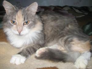 Кошка Люся Фото2