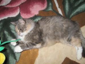 Кошка Люся Фото1