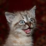 Котеночек нашел свой дом!