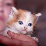 Котятки-малышастики разъехались по домам
