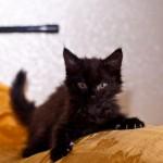 Милые котяшки дома