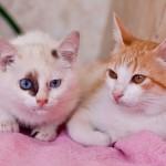 Сладкая парочка — Рыжик и Варечка уже дома
