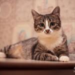 Кошечка-милашка дома