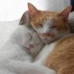 Плохо засыпаете? Возьмите с собой кошку…