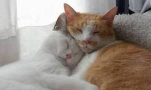 Как животные влияют на сон человека