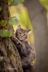 Кошка ЮЛи (7)