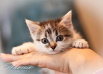 Котятки ОМ (4)