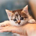 Милейшие котятки дома