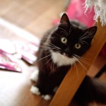 Кошка Машка дома