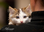 Милые котеныши (10)