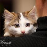 Котята дома