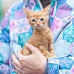 Акция ко Дню домашних животных «Доброта спасёт мир»