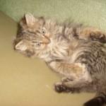 Mаленькая, пушистенькая кошечка нашла себе дом