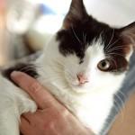 Жорик — особенный котик обрел дом:)
