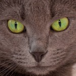 Cезара, плюшевая красотка с изумрудными глазами дома!!!