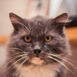 Вальяжный кот Тимофей дома