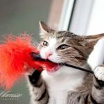 Янис маленький котёнок дома