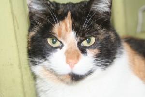 Кошка Анфиса Фото1
