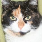 Кормление кошек и котят
