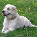 Изгнание глистов у собак