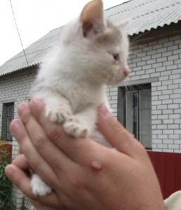 Котенок-малыш