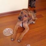 Милый щеночек остается дома