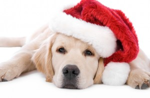 Щенок Рождество