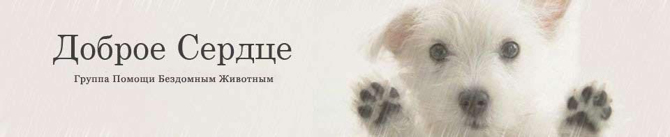 """Группа помощи бездомным животным """"Доброе сердце"""""""