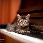 Котенок Веремей дома
