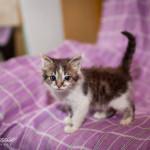 Котёныш-ласкуша дома