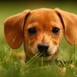 Полезные и бесполезные продукты для вашей собаки. О правилах правильного питания или чем нельзя кормить собаку.