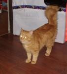 Рыжий котик ждет Вас