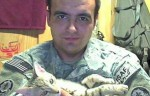 кота  из Афгана (1)