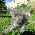 Котята которые потеряли маму нашли свой дом!!