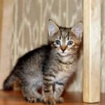 Котята, выбираем питомца в семью :)
