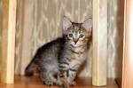 котята (13)